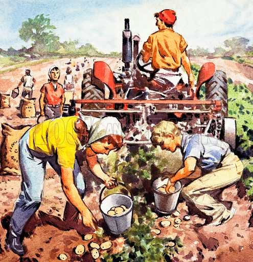 Potato picking. Panel from cover quiz from Look and Learn no. 245 (24 September 1966).