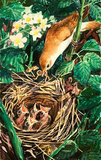 Bird feeding chicks in nest. Original artwork.
