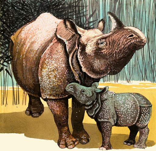 Rhinoceros and baby rhino. Original artwork.