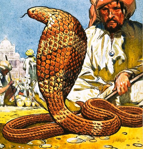 King Cobra. Original artwork from Look and Learn no. 245 (24 September 1966).