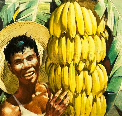 Bananas. Original artwork from Look and Learn no. 164 (6 March 1965).