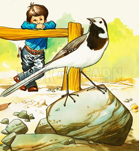 Boy watching an unidentified bird. Original artwork.