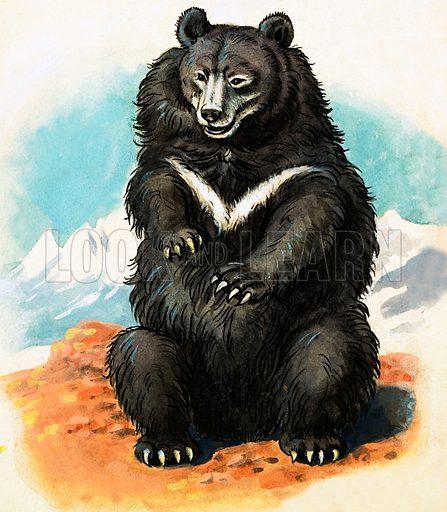 Unidentified breed of bear. Original artwork.