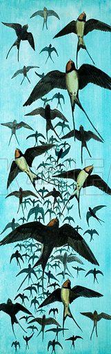Peeps Into Nature: Fly-Away Birds. Migration of Swallows. Original artwork from Treasure no. 197 (22 October 1966).