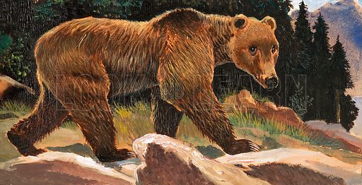 Wonders of Nature: Yogi Bear's Real-Life Relatives. Brown (or Kodiak) Bear. Original artwork from Look and Learn no. 129 (4 July 1964).