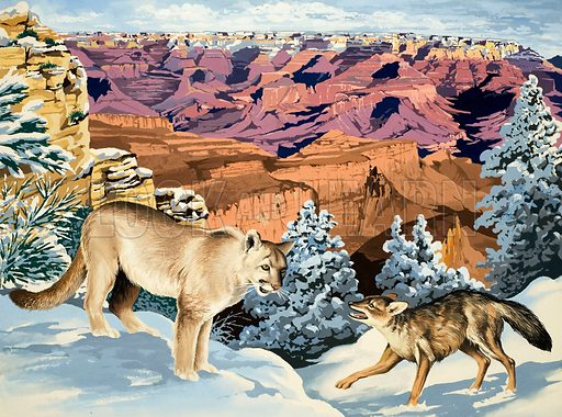 Peeps Into Nature: The Grand Canyon National Park. Puma and Coyote. Original artwork from Treasure no. 275 (20 April 1968).