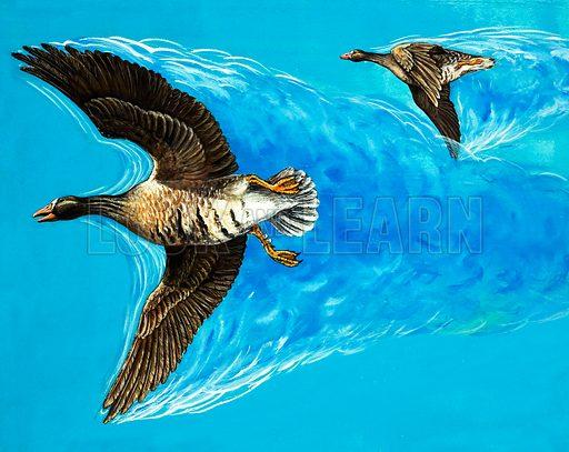 Turbulence caused by birds flying. Original artwork.