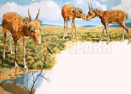 Little Big Nose: The Saiga Antelope. Original artwork from Treasure no. 353 (18 October 1969).