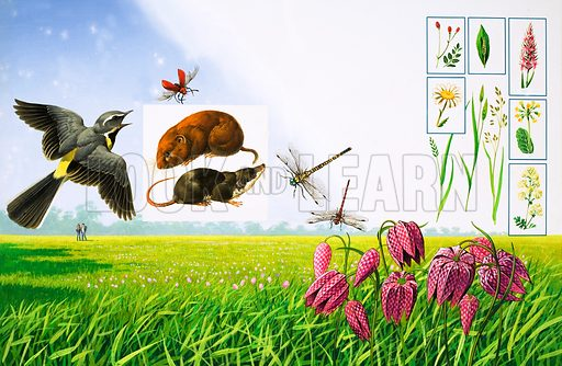 English meadow,  picture, image, illustration