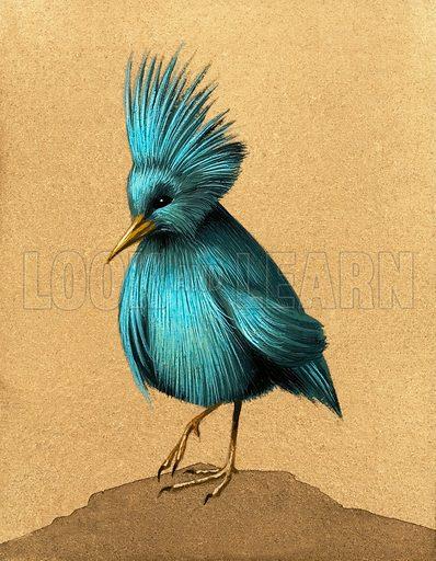 Unidentified flightless bird. Original artwork.