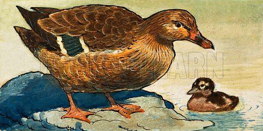 Duck and Duckling. Original artwork.