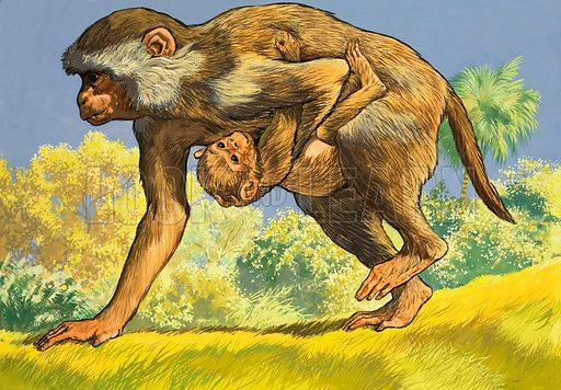 Monkey carrying a baby monkey. Original artwork.