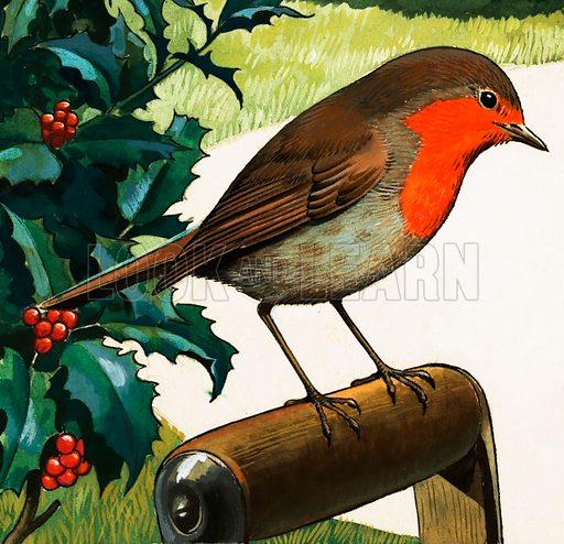 Robin perching on the handle of a spade in a garden. Original artwork.