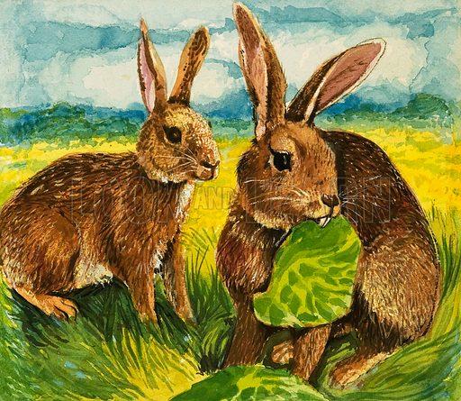 Rabbits eating. Original artwork.