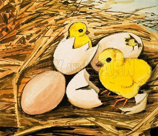 Chicks hatching. Original artwork.