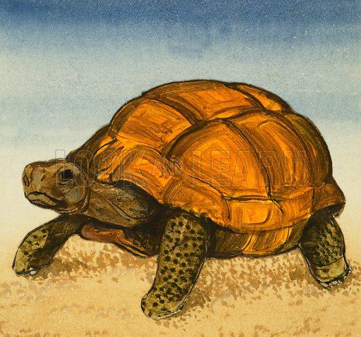Tortoise. Original artwork.