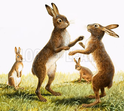 March hares, picture, image, illustration