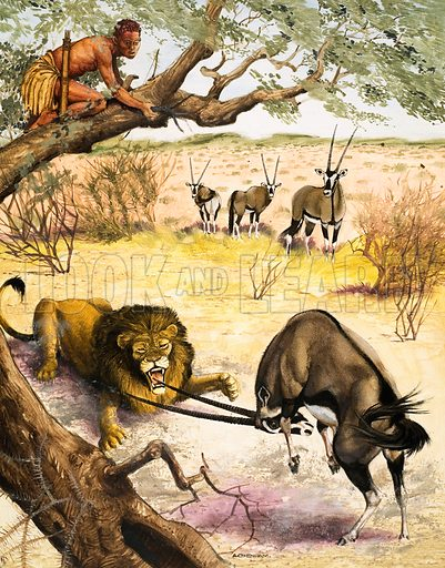 Peeps at Nature: The Kalahari Desert. Animals found in the Kalahari Desert. Original artwork from Treasure no. 217 (11 March 1967).