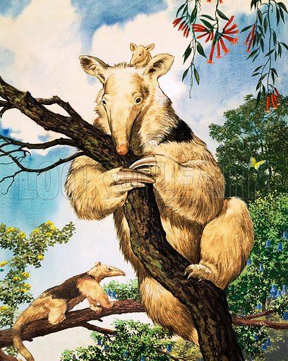 Nature Wonderland: Piggy-back Baby. The South American Tamandua lives on ants and termites. Original artwork from Treasure no. 414 (19 December 1970).