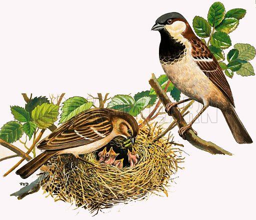 Unidentified birds feeding chicks. Original artwork.