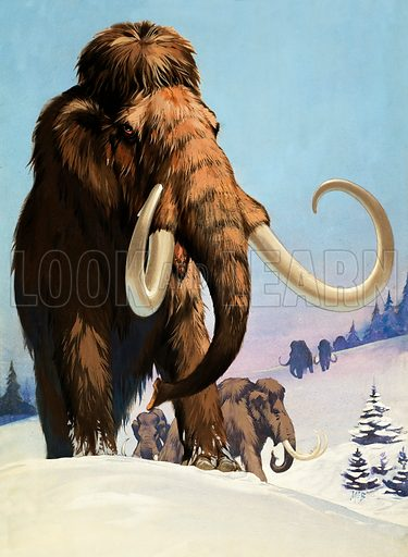 Woolly mammoths, prehistoric animals of the Ice Age