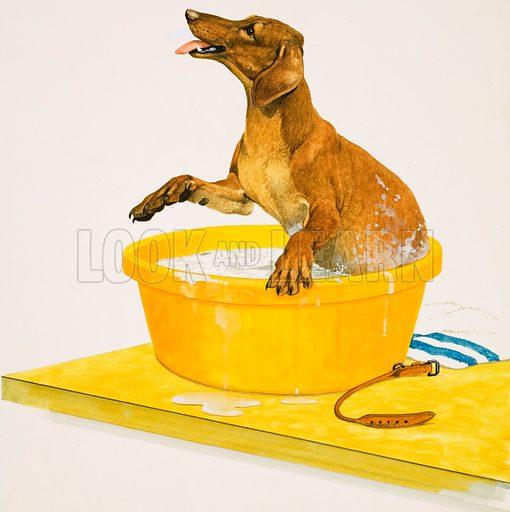 Washing the dog. Original artwork.