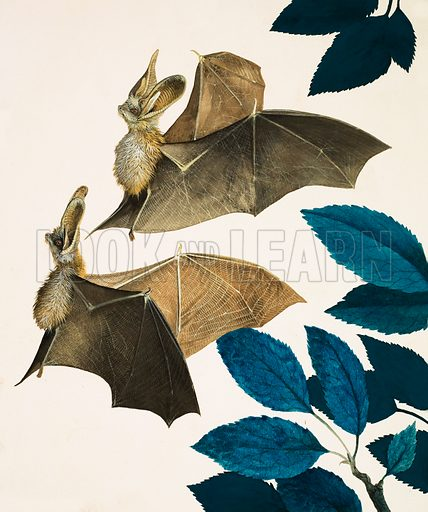 The Long-Eared Bat. Original cover art from Treasure no. 247 (7 October 1967).