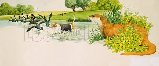 Out for a Duck! based on a short story by Edna M Cass. An otter watches a dog chasing ducks. Original artwork from Look and Learn no. 311 (30 December 1967). Originally published in black & white.