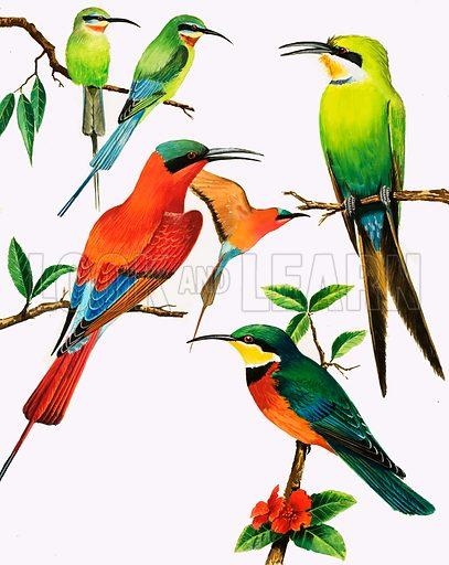 Unidentified birds montage. Original artwork.