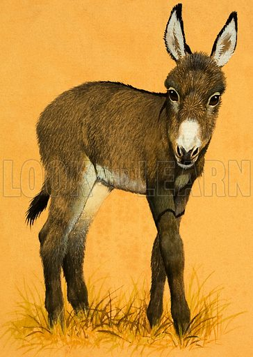 Donkey foal. Original artwork from Once Upon a Time 7 (29 March 1969).
