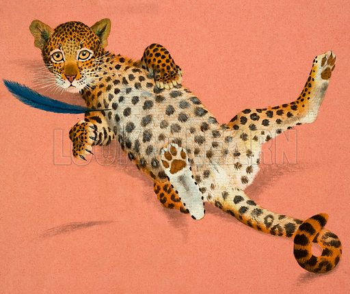 Leopard cub. Original artwork from Once Upon a Time 7 (29 March 1969).