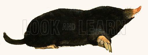 Mole. Original artwork.