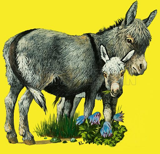 Donkey and donkey foal. Original artwork.