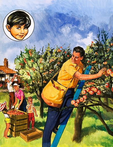 People You See. Apple pickers. From Teddy Bear (date unknown). Original artwork loaned for scanning by the Illustration Art Gallery.