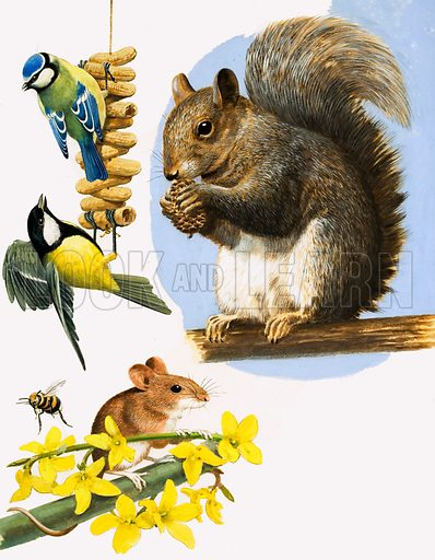 They're So Busy. Busy little animals, including the Blue Tit, Great Tit, Bumble Bee, Field Mouse and Grey Squirrel. Original artwork from Once Upon a Time 164 (1 April 1972).
