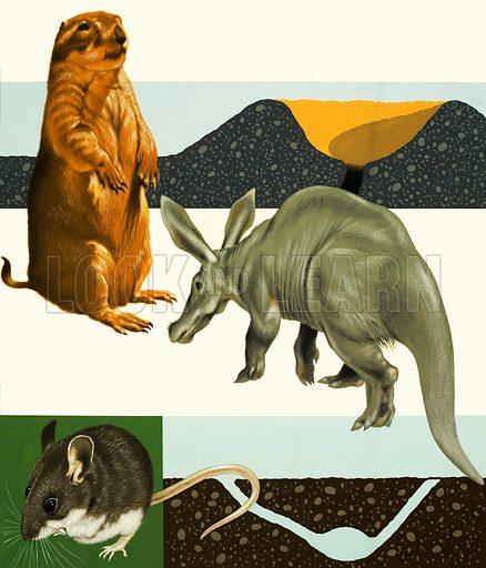 Unidentified animals montage including prairie dog and anteater. Original artwork.