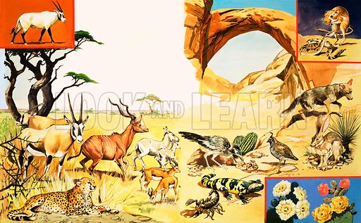 All Sorts of Desert Creatures. (Left page) Oryx (inset), LtoR: Oryx, Cheetah, Kudo, Arabian wild ass, Dorcas gazelle; (Right Page) kangaroo rat and rattlesnake (inset top), LtoR: desert quail, gila monster, scorpion, sand grouse, coyote, jack rabbit, plus cactus (inset bottom). From Once Upon a Time 146 (27 November 1971).