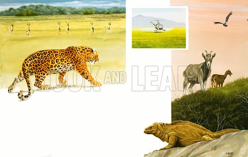Unidenfieid African wildlife montage with leopard. Original artwork.