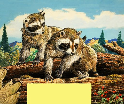 Racoons. From Once Upon a Time 175.