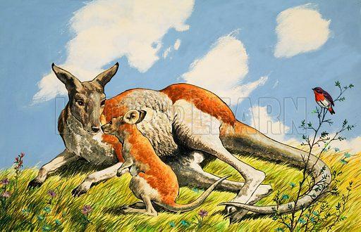 Relaxing kangaroo with baby