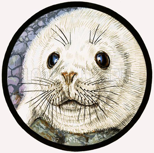 Our Sea Friend The Seal. Seal pup. From Once Upon a Time 123 (19 June 1971).