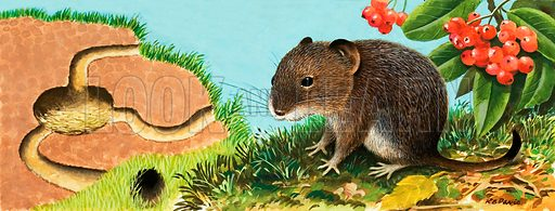 Unidentified mouse and his house. Original artwork from Once Upon a Time (labelled 165).