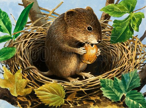 Unidentified mouse eating acorn in nest. Original artwork from Once Upon a Time (labelled 165).