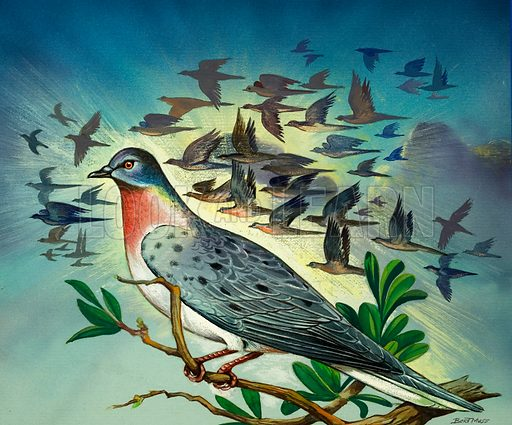 Passenger Pigeons. From Once Upon a Time 111 (27 March 1971).