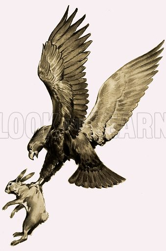 The Great Greek Storytellers: The Eagle and the Hare, from the story by Aesop. He died with a Fable on His Lips. From Look and Learn no. 112 (7 March 1964).