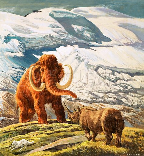 Wooly mammoth and rhinoceros, prehistoic animals of the Ice Age. Original artwork (labelled WWB).