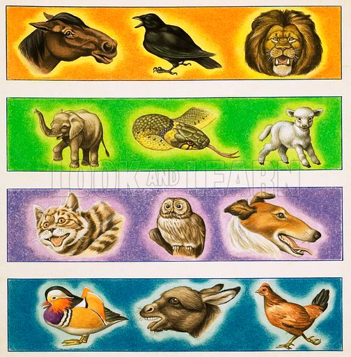 Unidentified montage of animals. Original artwork from Once Upon a Time Annual 1970.