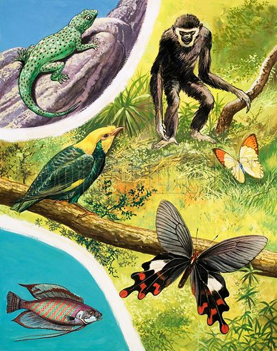 Great Rivers of the World: Irawaddy. Some animals you might find in Burma including (top to bottom) the House Gecko, Lars Gibbon, Great Orange-tip Butterfly, Golden Crested Mynah, the Windmill Butterfly and Striped Gourami fish. From Once Upon a Time 124 (26 June 1971).