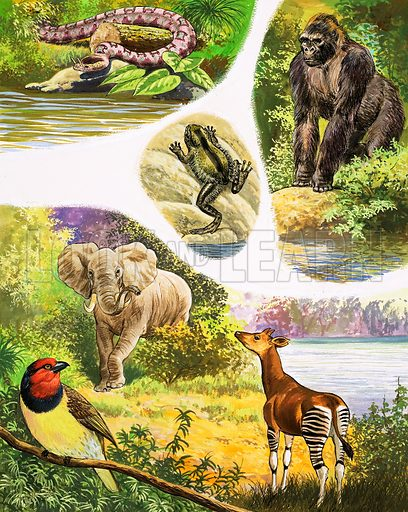 Great Rivers of the World: The Congo. Animals you might find in the Congo include the Nose-Horne Viper, the Hairy Frog, the Gorilla, the African Elephant, the Black-Collared Barbet and the Okapi. From Once Upon a Time 112 (3 April 1971).