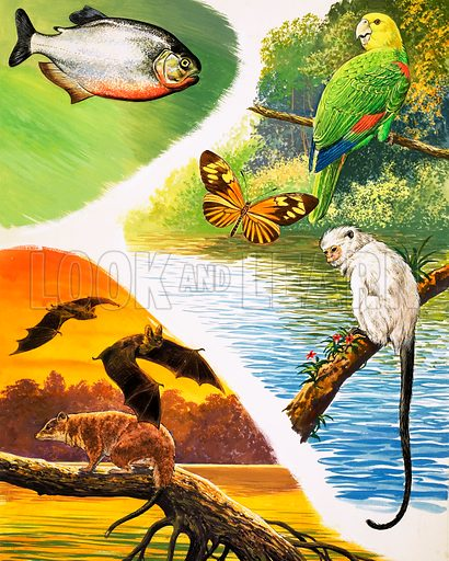 Great Rivers of the World: The Amazon. Animals you might find in Brazil include Piranha, the Yellow-headed Parrot, Heliconus Butterfly, the Silver Marmoset, Vampire Bats and the Thick-tailed Opossum. From Once Upon a Time 114 (17 April 1971).